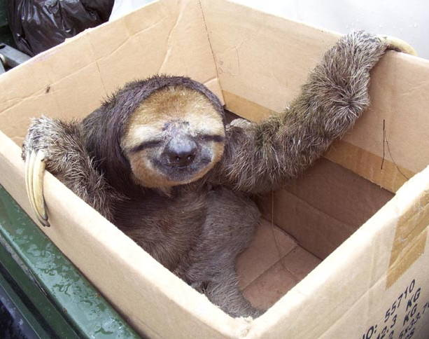 sloth-in-a-box