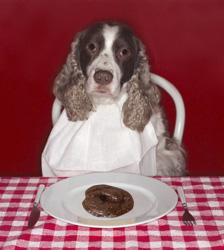 Dog Eats Poop