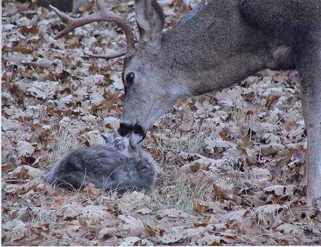 You ever seen a deer lick a cat?